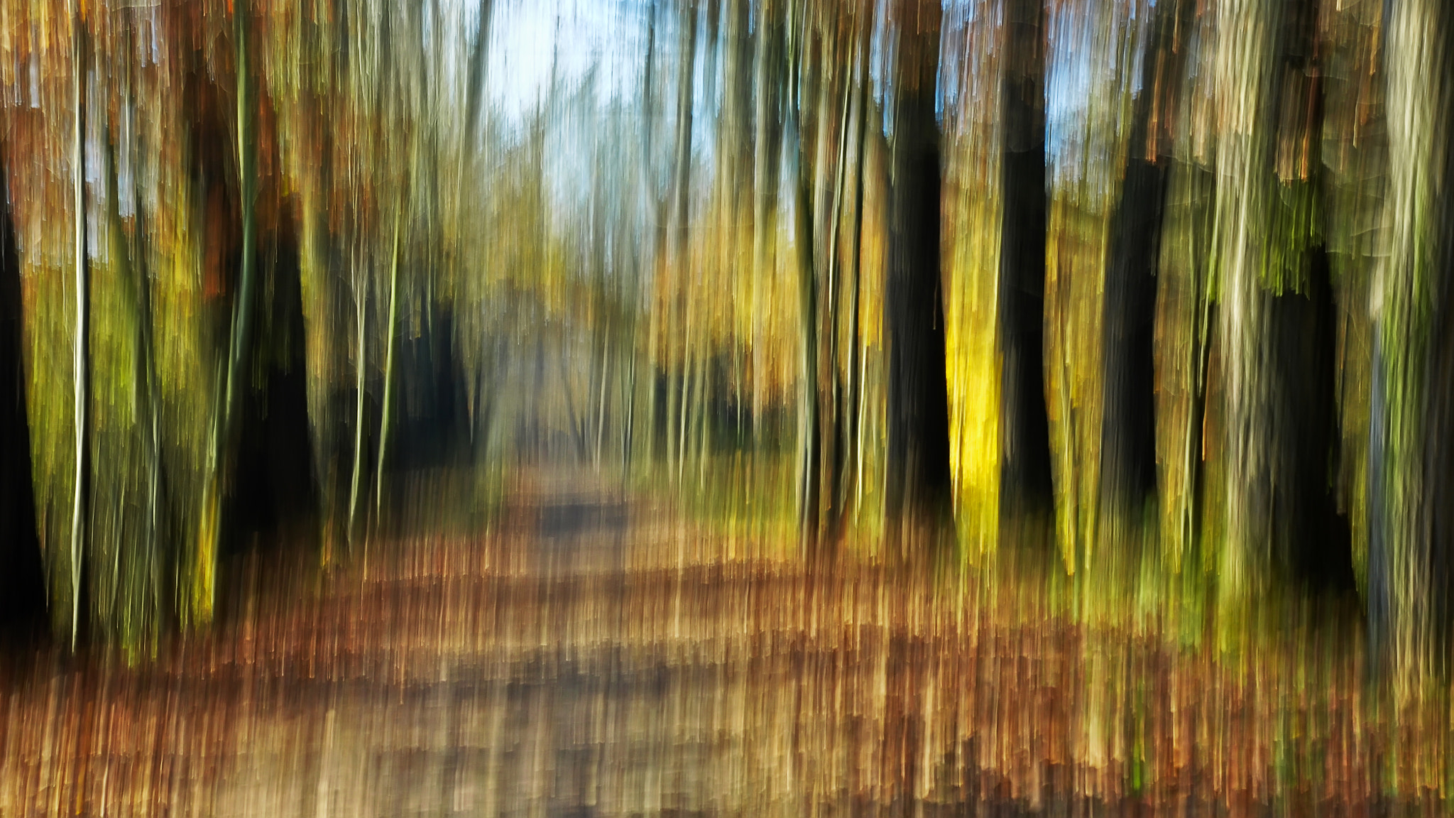 Photograph Forest by Lubomir Marcak on 500px