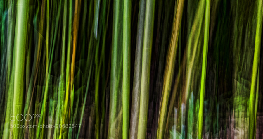 Photograph Bamboo Abstract by Warren Ishii on 500px