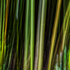 Bamboo Abstract by Warren Ishii (haiku626)) on 500px.com