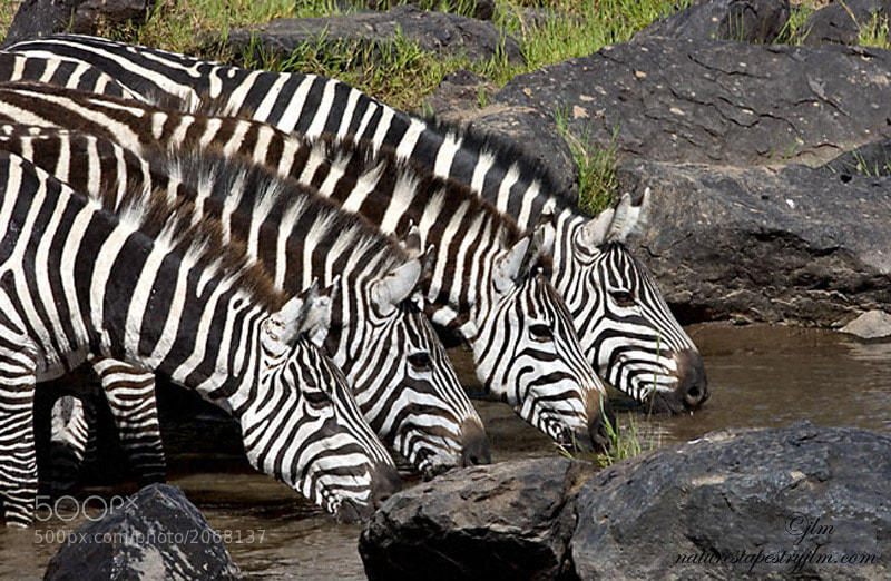 Taken on one of our trips to The Masai Mara in Kenya. It amazes me that there are notwo alike !!!!!!