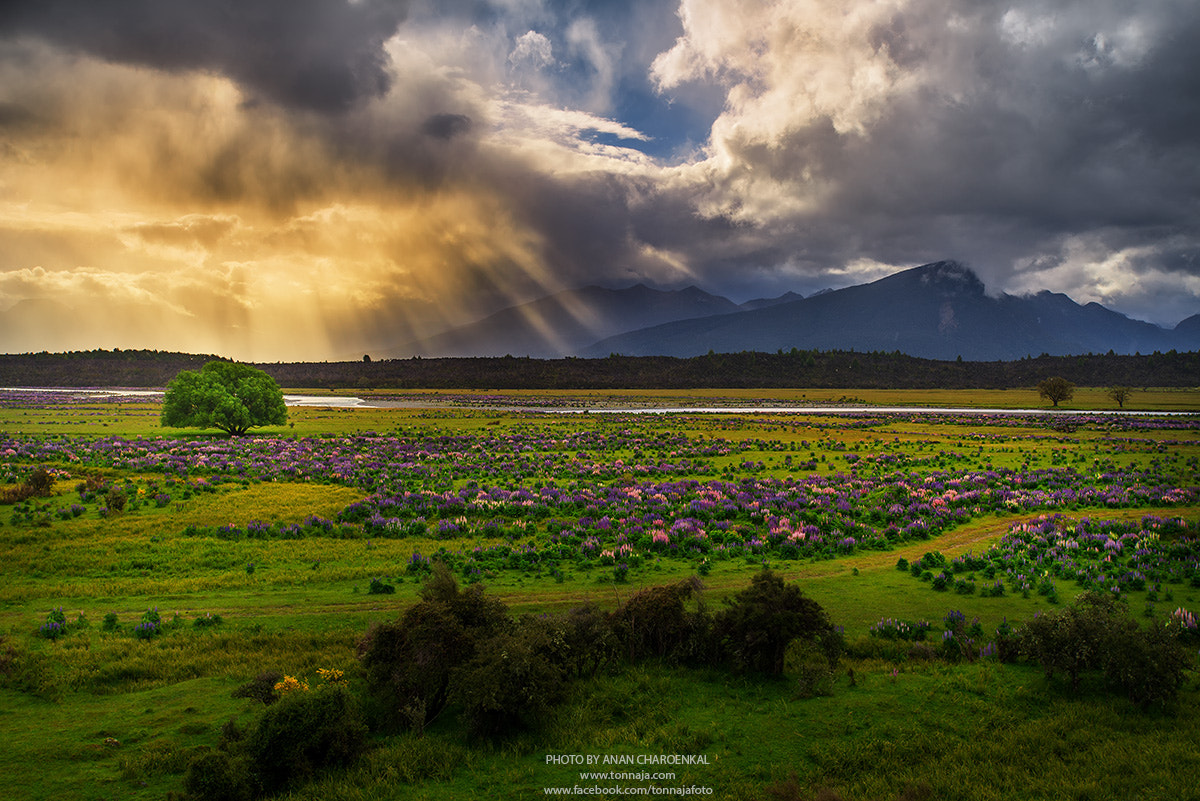 Photograph New Zealand in summer season by Tonnaja Anan Charoenkal on 500px