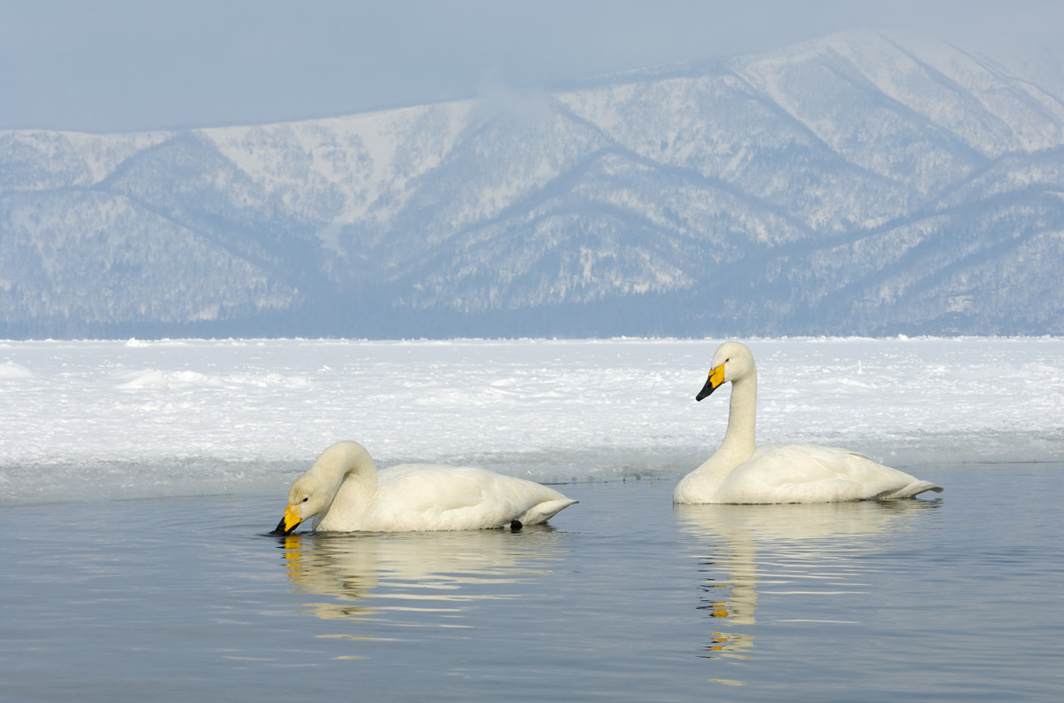 Photograph Kussharo Lake by Harry  Eggens on 500px
