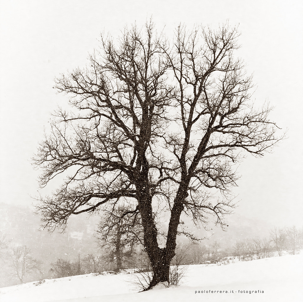 Photograph In the snow by Paolo Ferrera on 500px