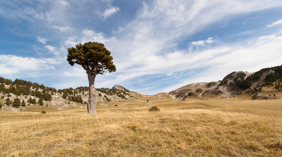 Photograph The Queyrie's Old Tree by Nicolas Gailland on 500px
