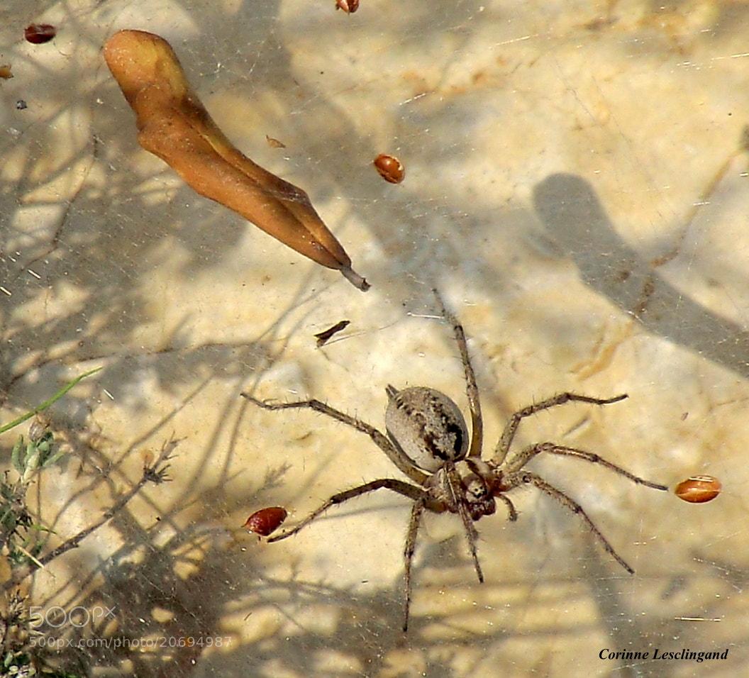 Photograph Composition d'automne by corinne Lesclingand on 500px