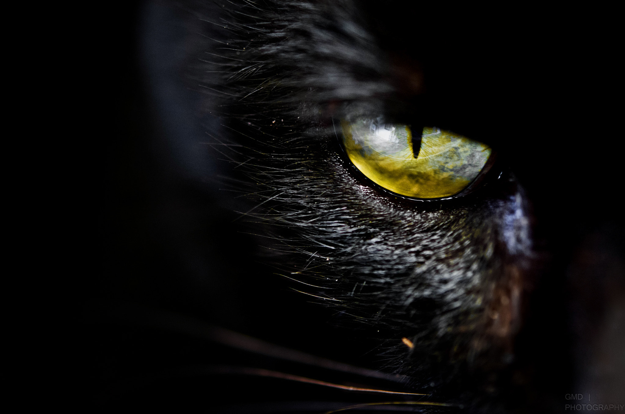 Photograph Look at me closely by Glenn Dumaguing on 500px