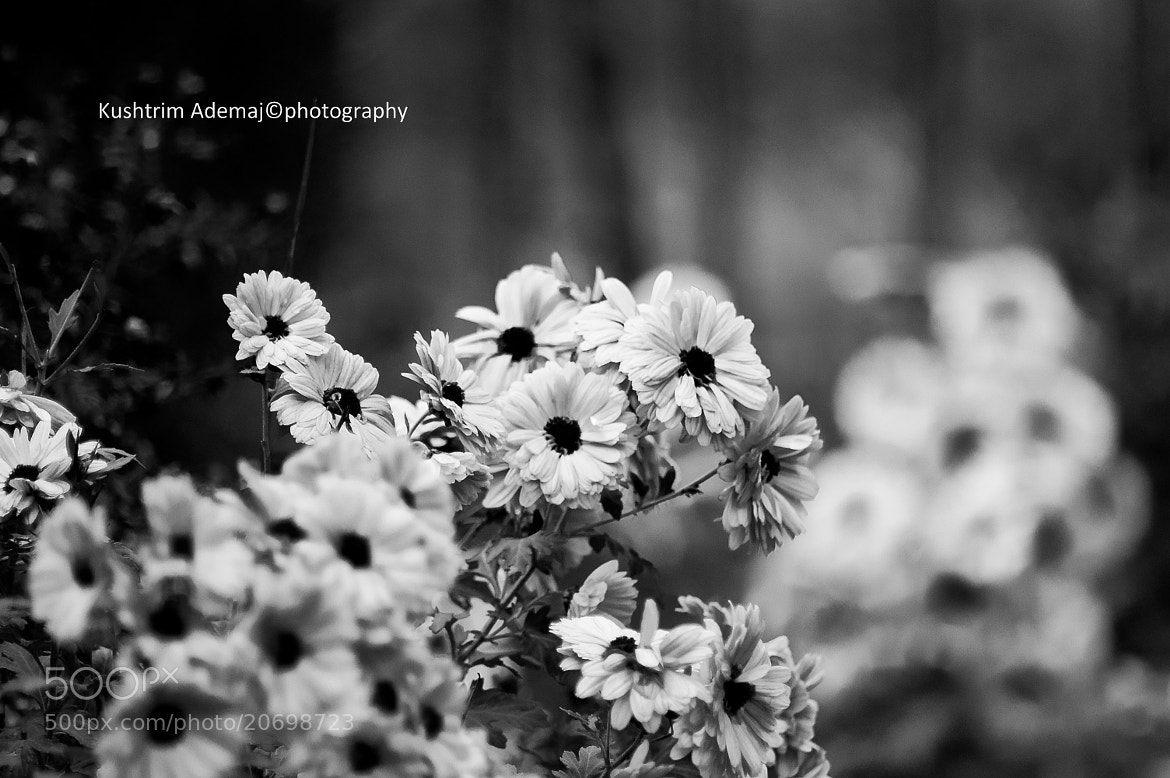 Photograph Flower by Kushtrim Ademaj on 500px