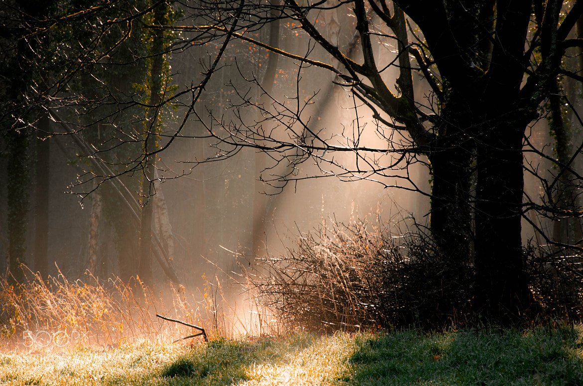 Photograph Forest's Mist by Pawel Niktos on 500px