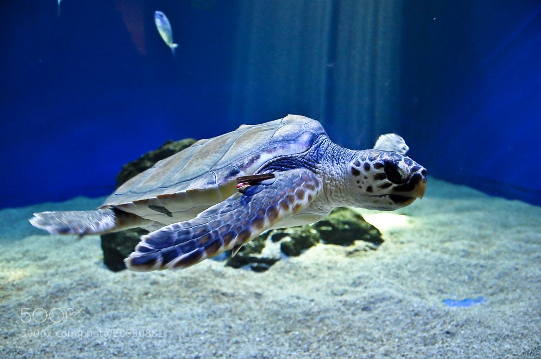Photograph Underwater Turtle by Luis Salha on 500px
