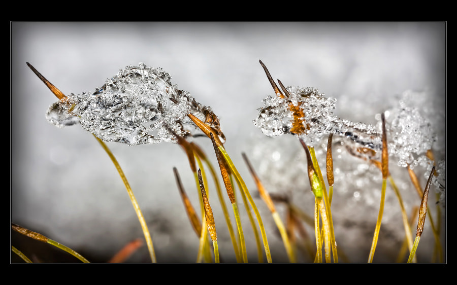 Photograph Winter is here 8 by Jaroslava Melicharová on 500px