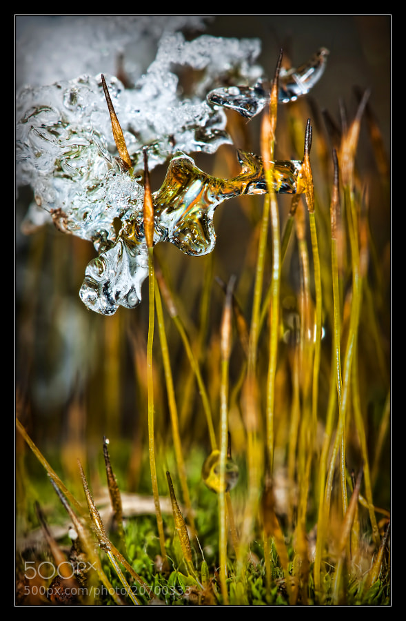 Photograph Winter is here 9 by Jaroslava Melicharová on 500px