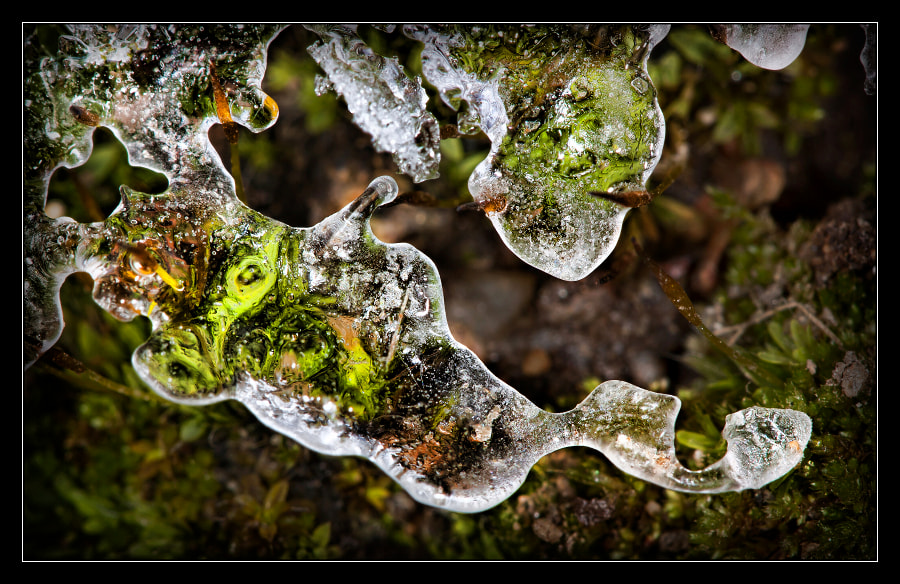 Photograph Winter is here 11 by Jaroslava Melicharová on 500px