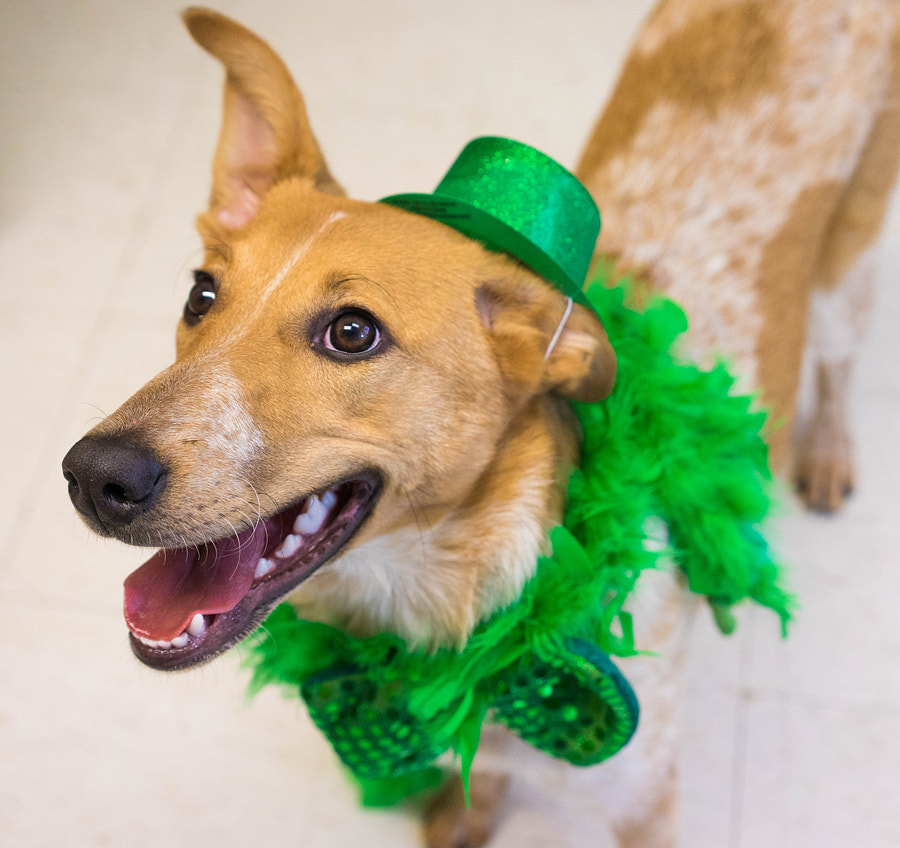 St. Patrick's Day at the ARL! by Meg Yohn on 500px.com