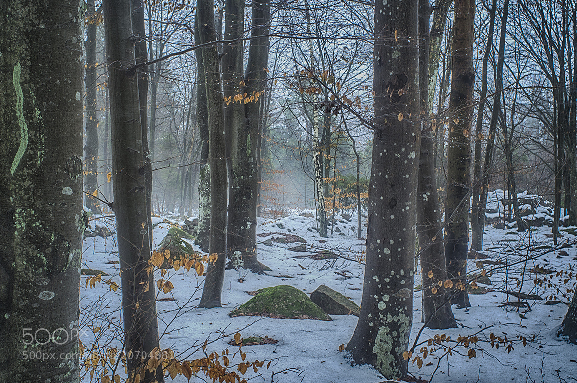 Photograph Foggy snow by Ola Warringer on 500px