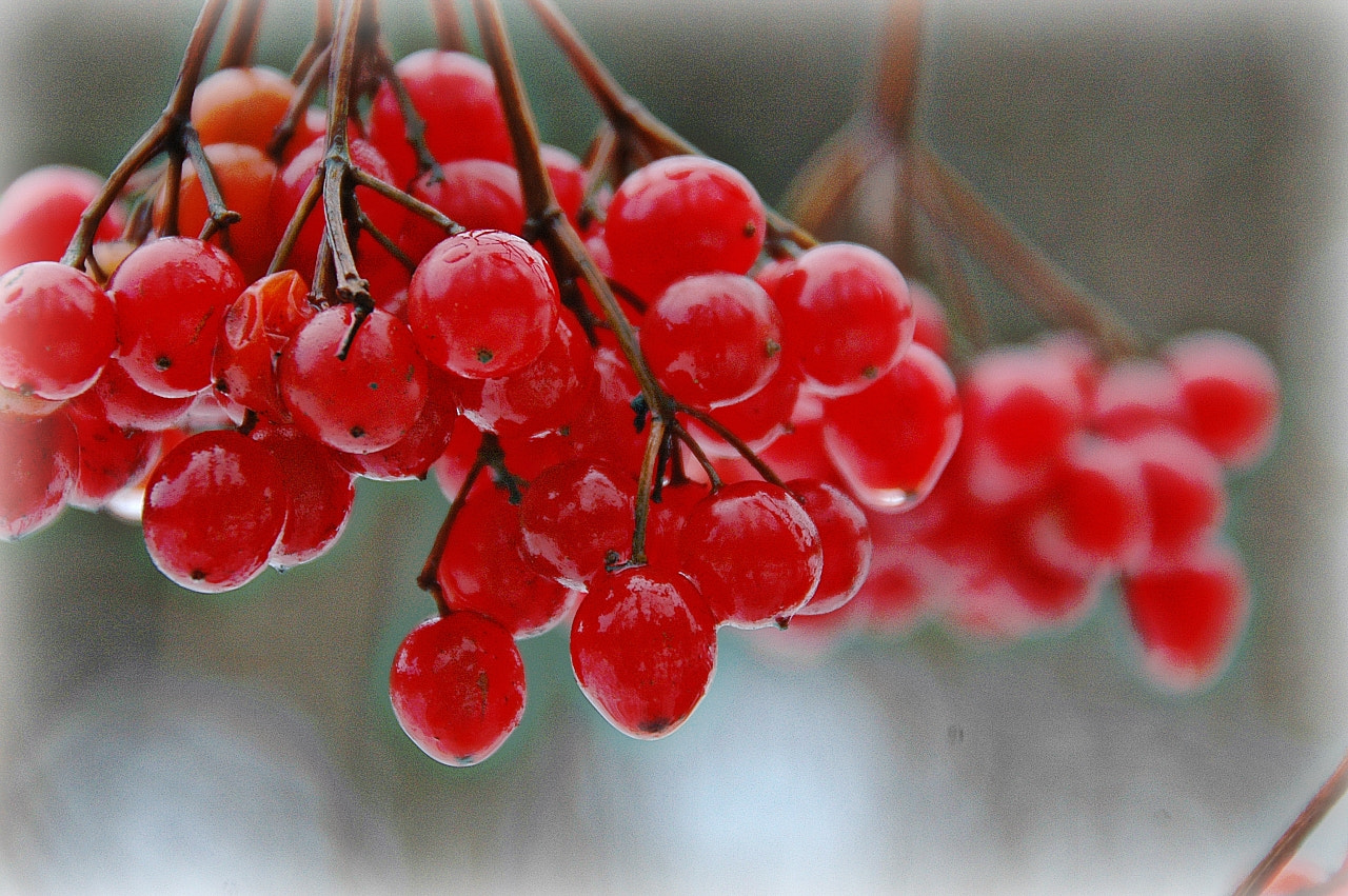 Photograph Winter Berry II by Sir Trauti on 500px