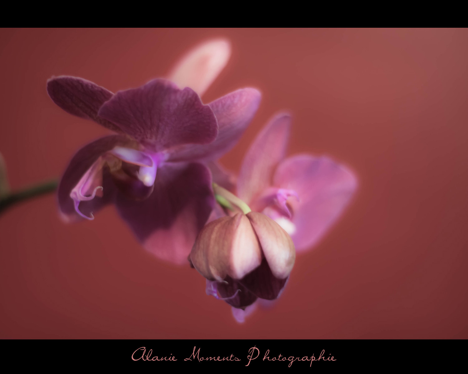 Photograph Orchidée by Alanie Moments on 500px