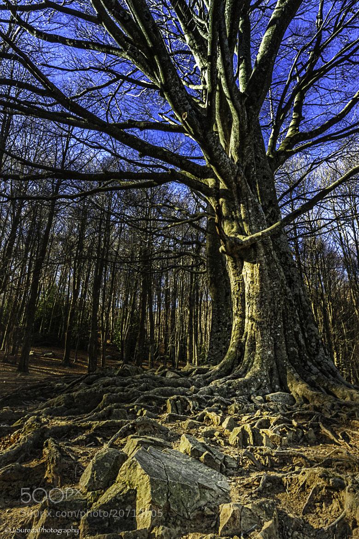 Photograph Narnia by Joel Sureda on 500px