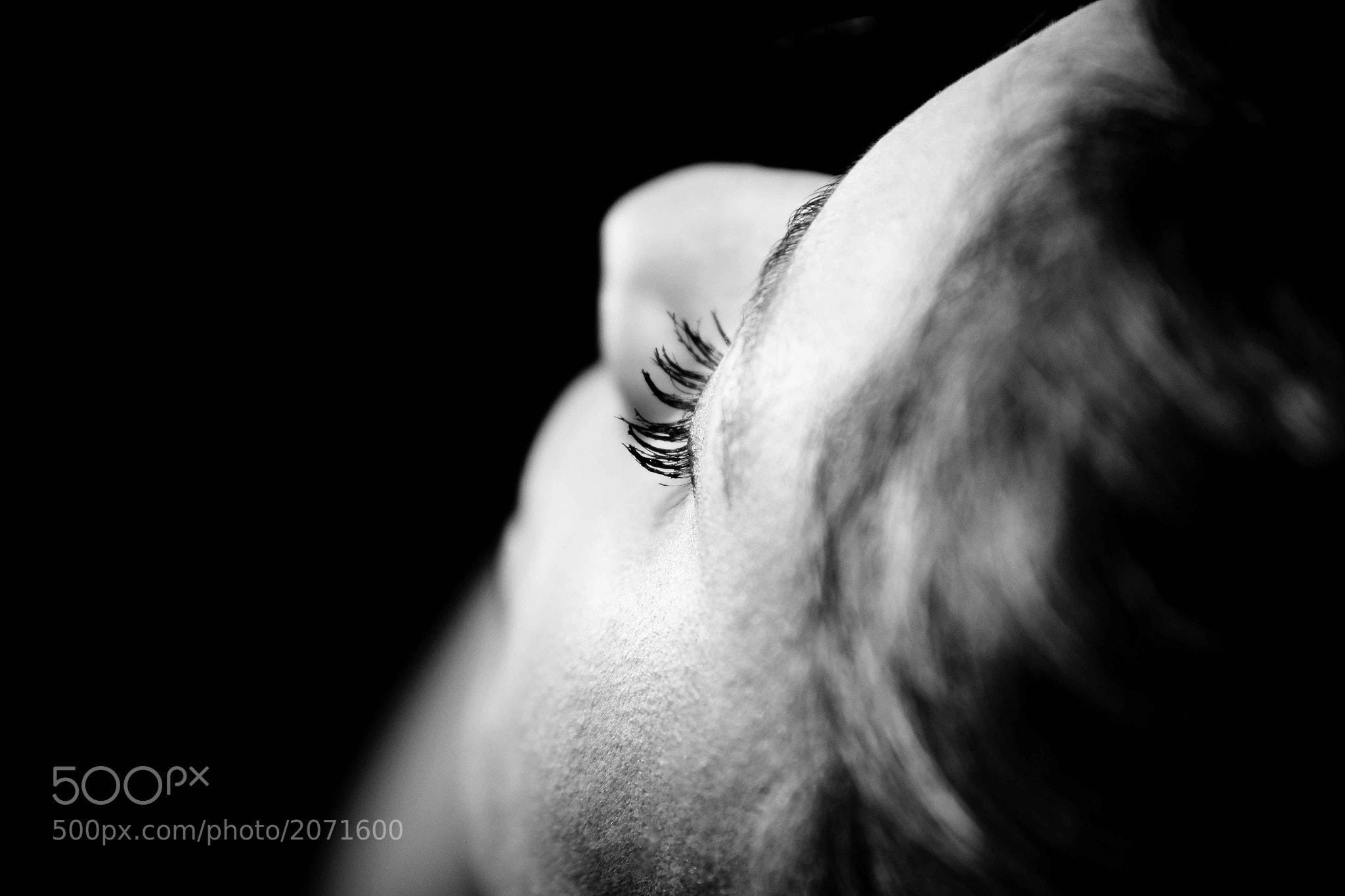 Photograph Untitled by Carina Pelegrini  on 500px