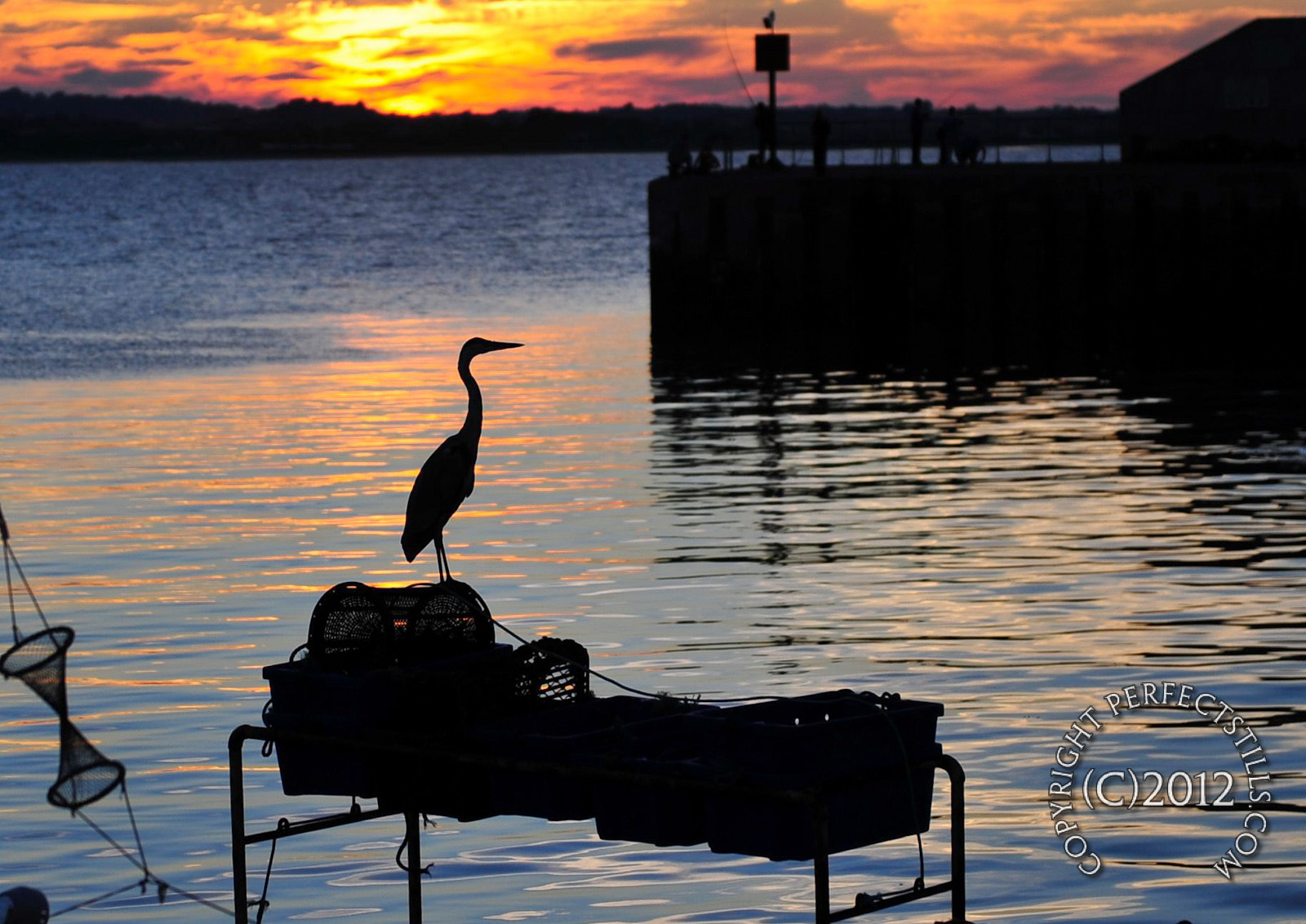 Photograph Heron Waiting by PerfectStills Martin on 500px
