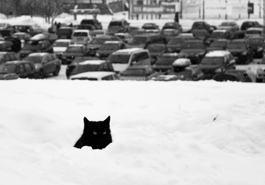 Photograph cat in snow by Helen Sergeenko on 500px