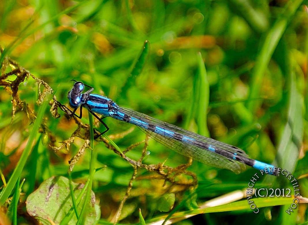 Photograph The Dragon Fly by PerfectStills Martin on 500px