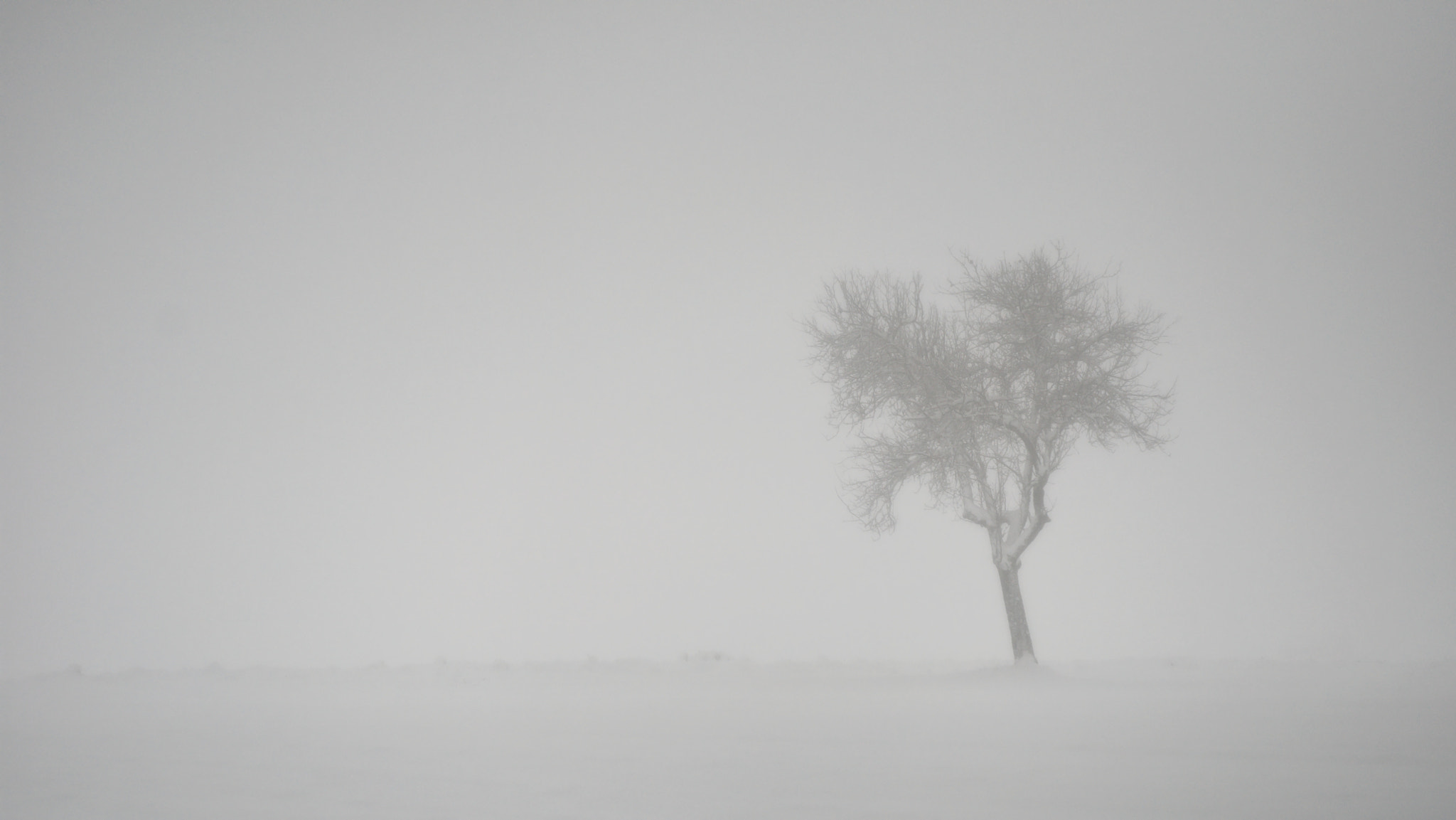 Photograph Tree, snow and fog by Alex  on 500px