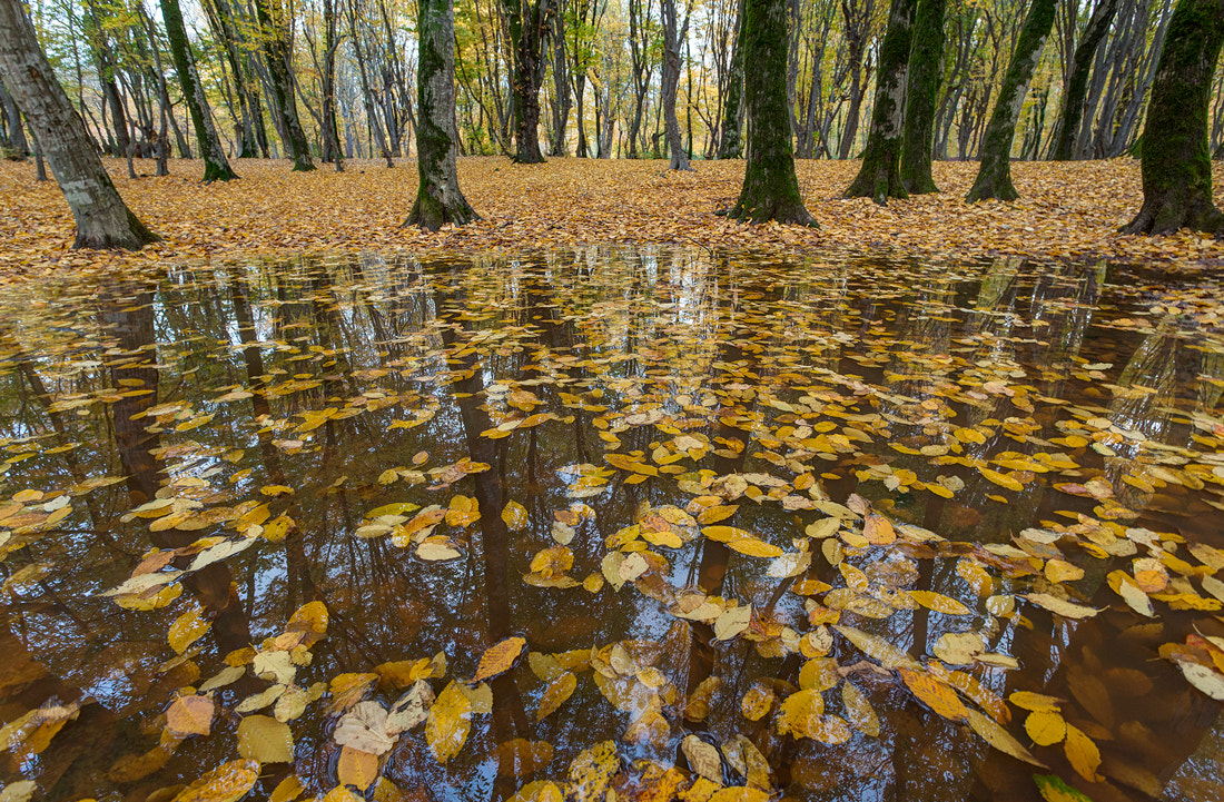 Photograph Fall of Autumn by S'Javad Miri on 500px