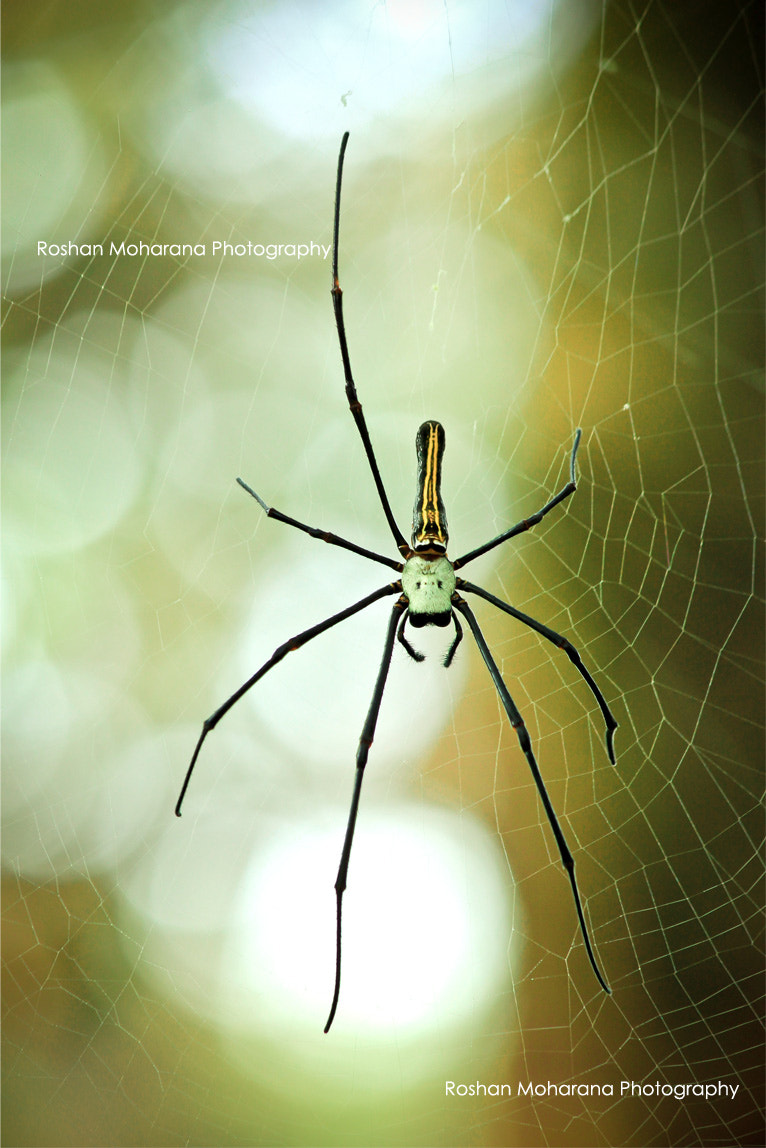 Photograph Spider by Roshan Moharana on 500px