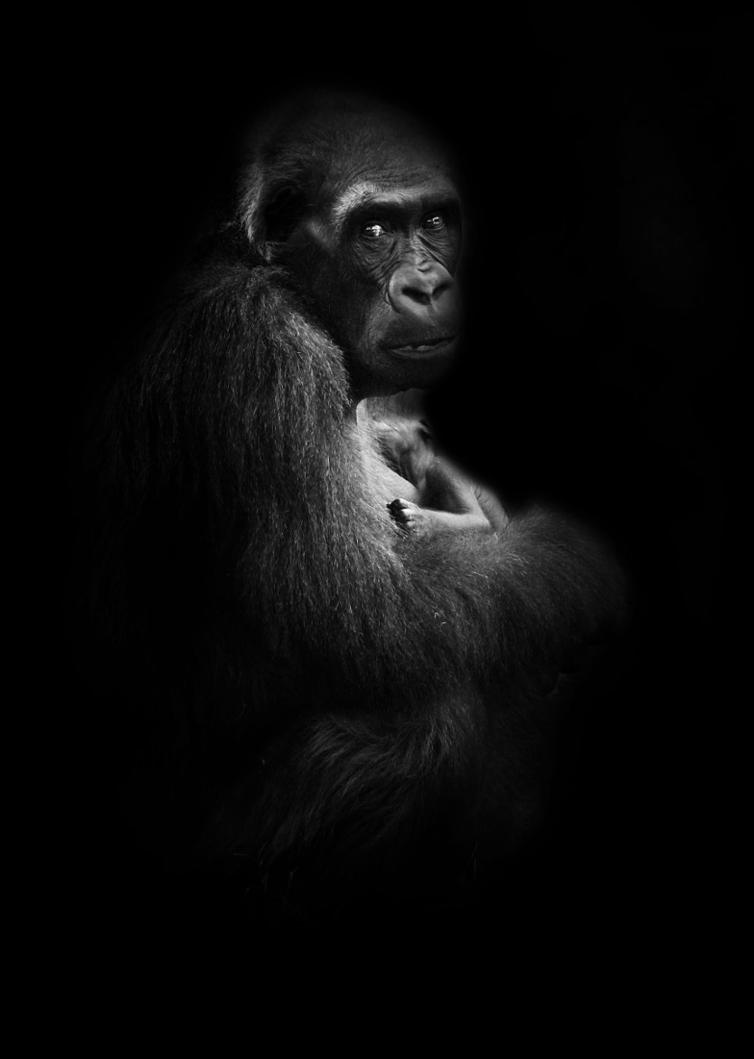 Photograph Mother #3 by Steve Kotler on 500px