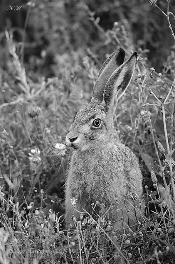 bunny by Nono M. (EventphotoProd)) on 500px.com