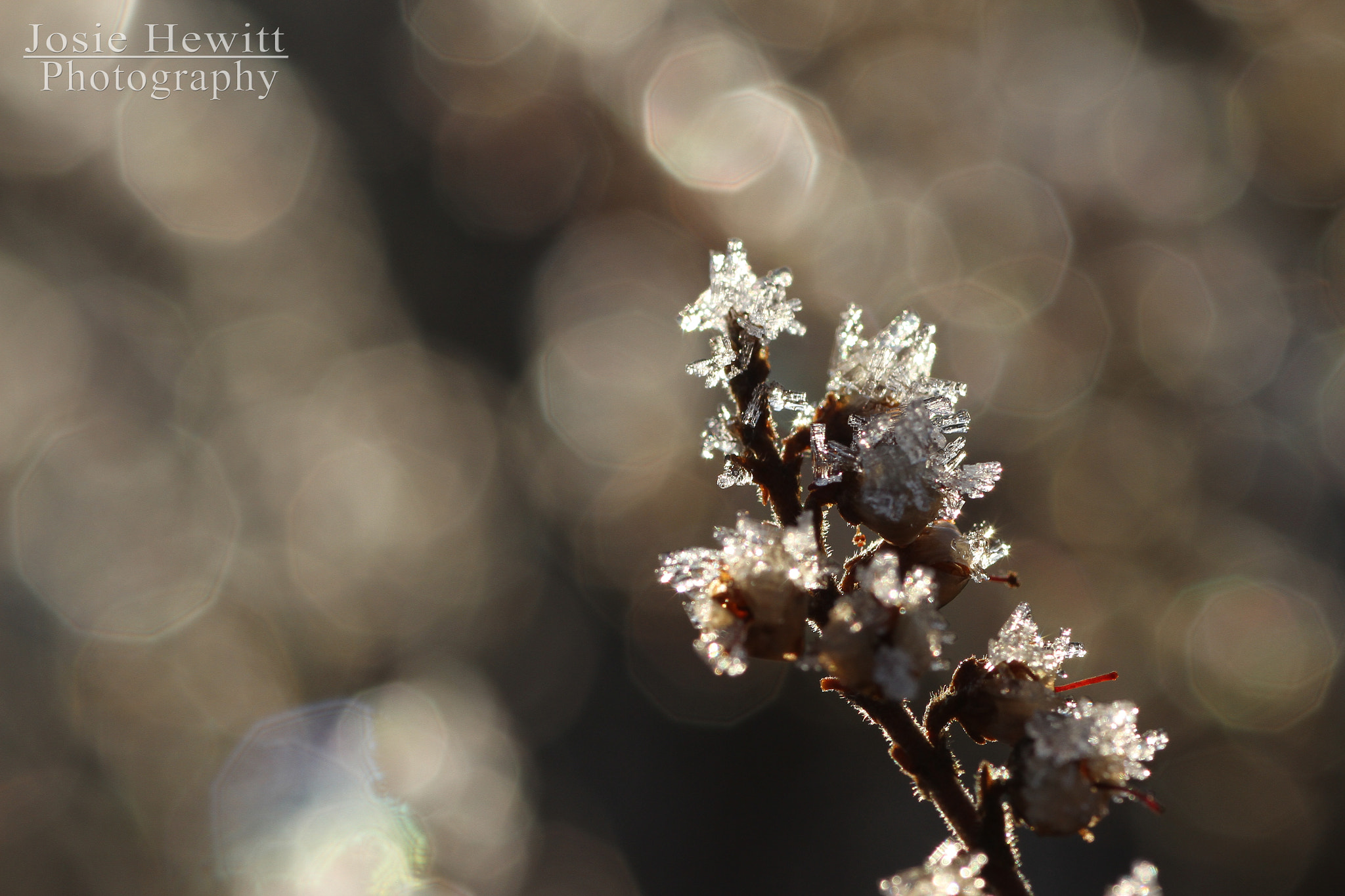 Photograph Frosty plant by Josie Hewitt on 500px