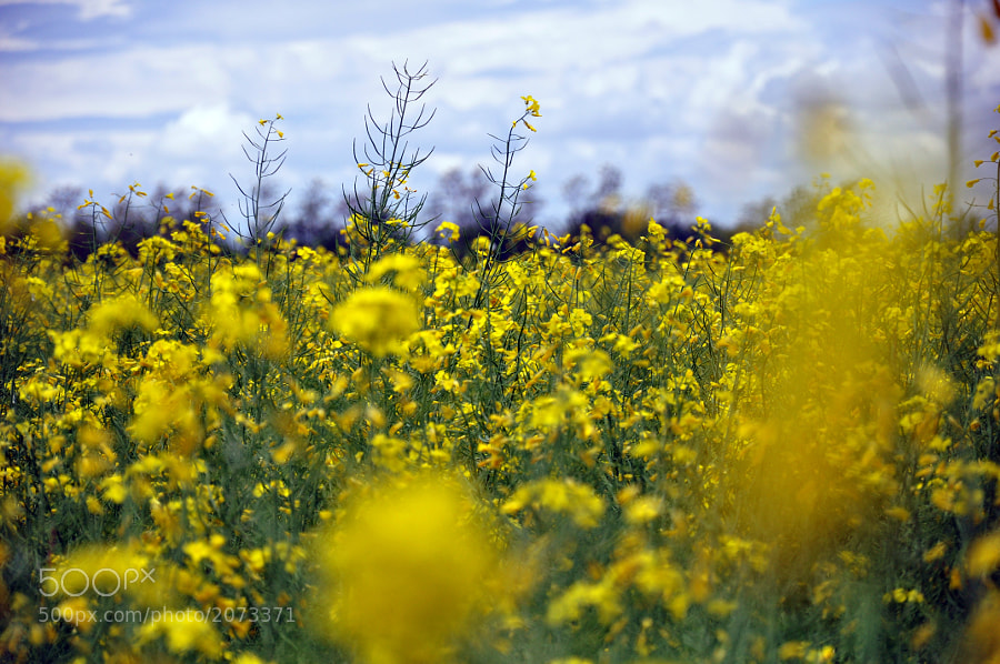 Photograph yellows by Riccardo Marsilio on 500px