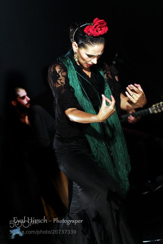 Photograph Flamenco by eyal hirsch on 500px