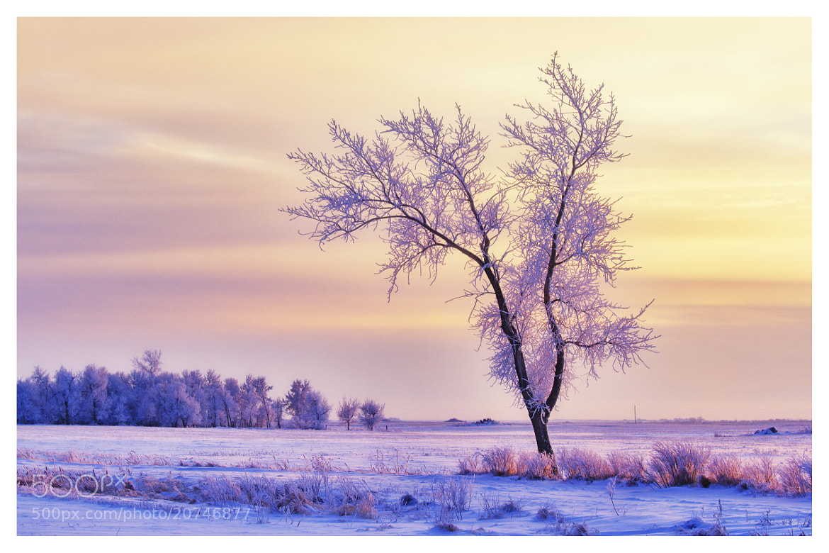 Photograph Frozen Sunset by Brenton Biggs on 500px