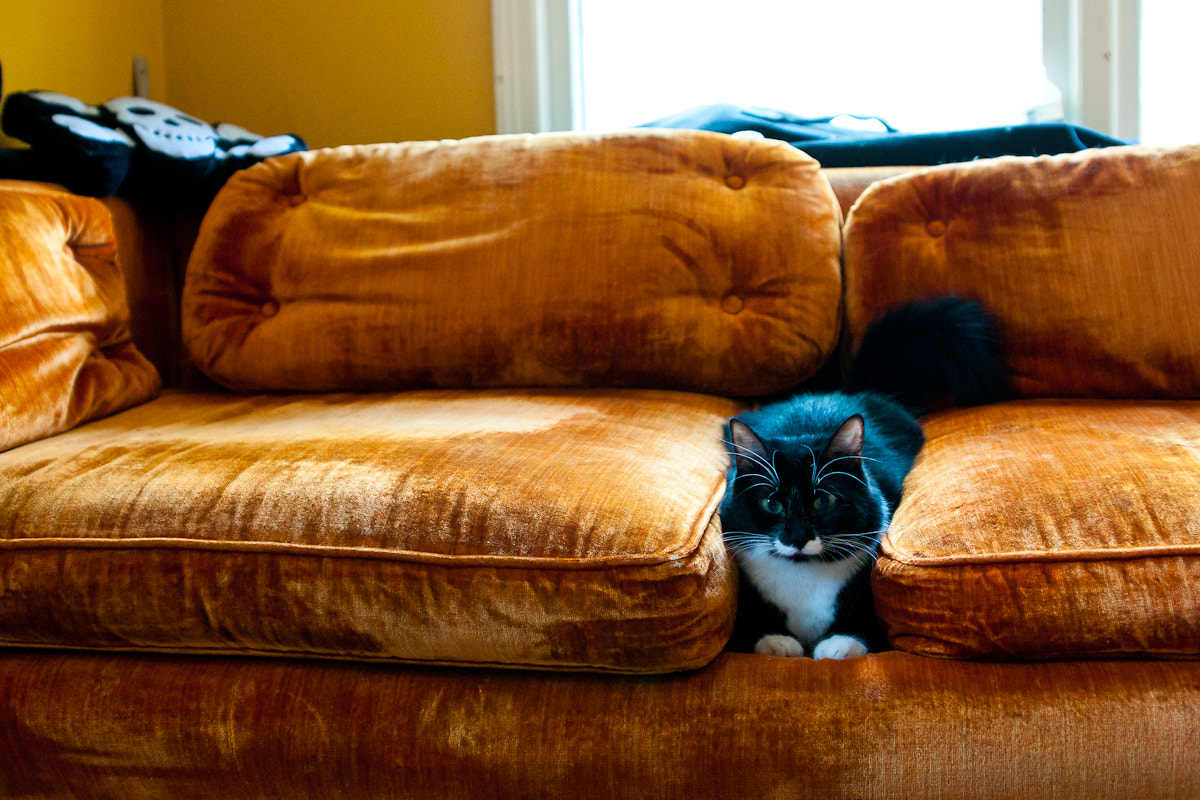 Photograph Couch Spacer by Nathan Black on 500px