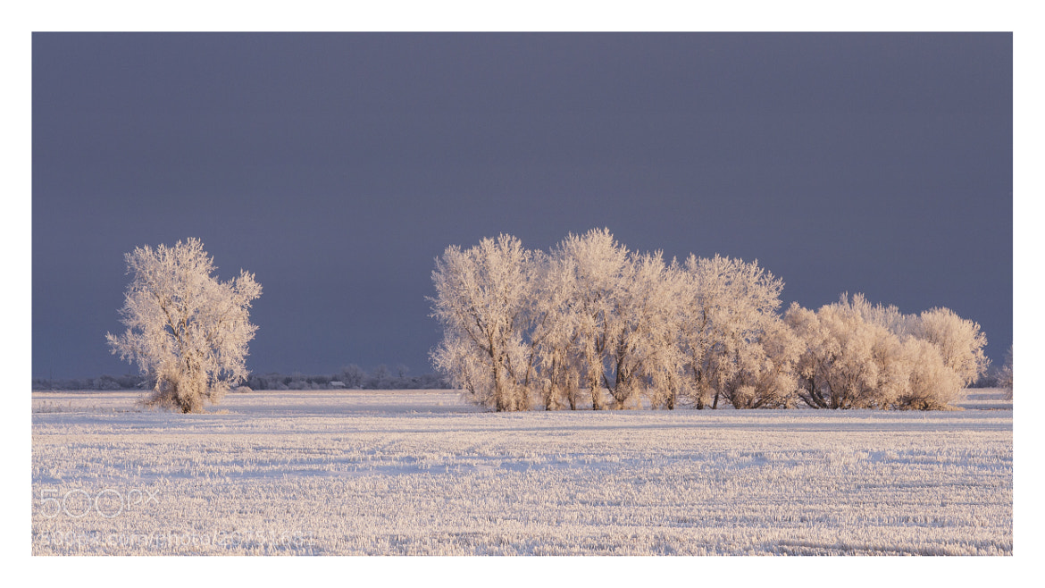 Photograph Frozen Together  by Brenton Biggs on 500px
