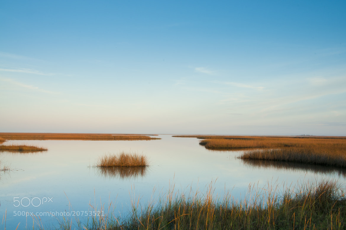 Photograph Salt marsh at Dickerson Bay by Rex Adams on 500px