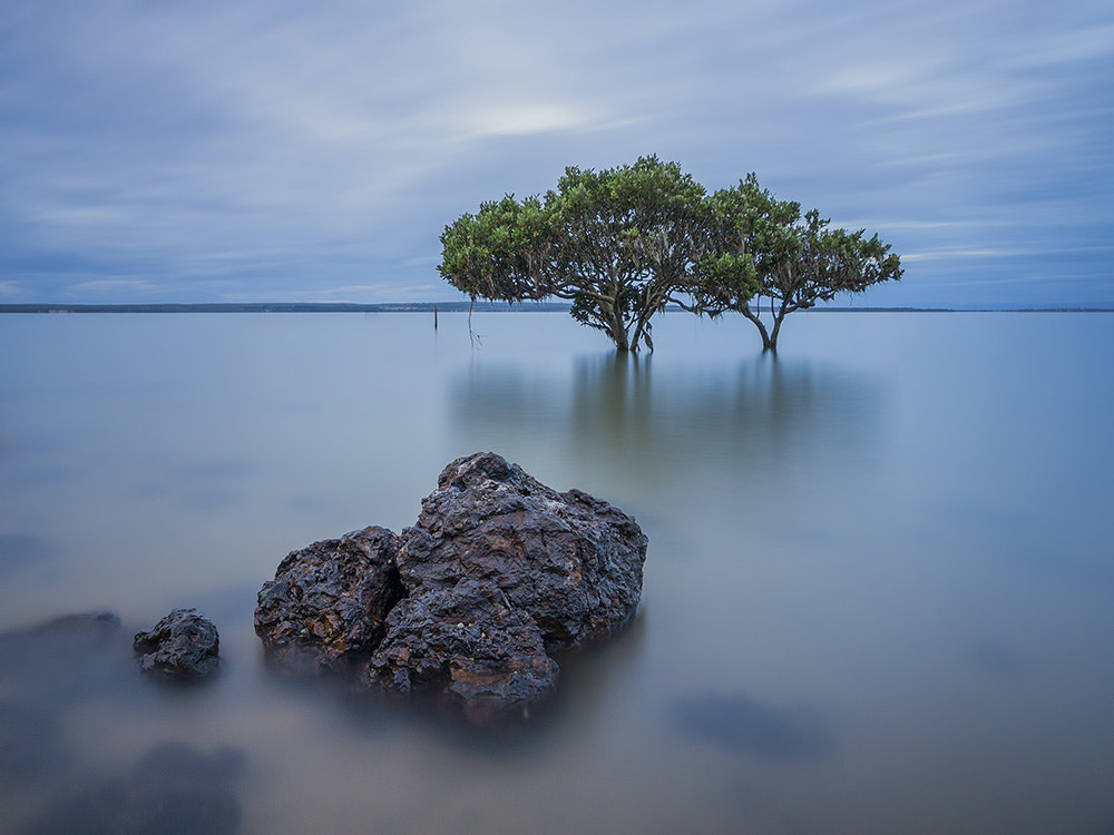 Photograph Mangroves by Dave Cox on 500px