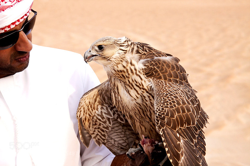 Photograph Falcon.. by Gwiyun Park on 500px