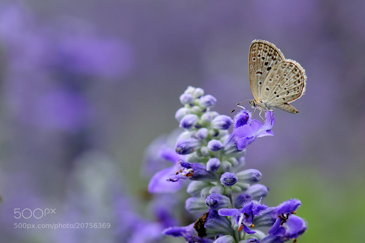 Photograph Purple by 該出去走一走了 Outgoing on 500px