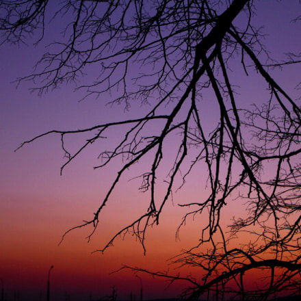Branches and beautiful sunset