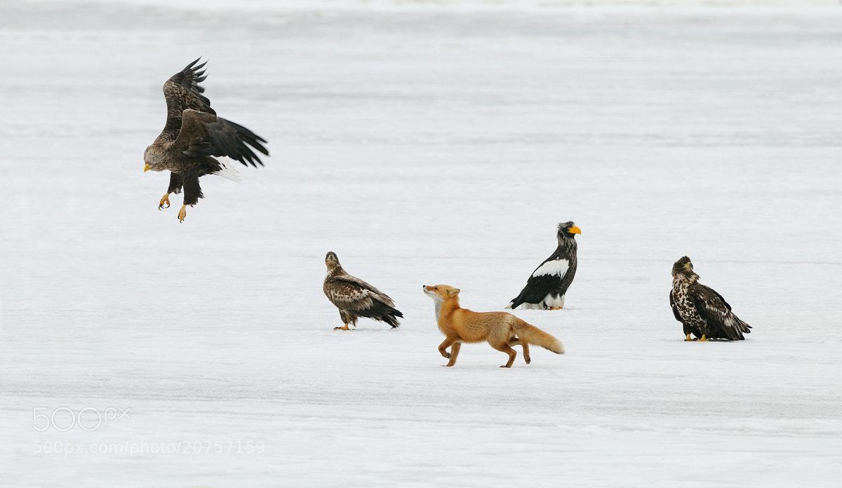 Photograph In Between Birdies by Harry  Eggens on 500px