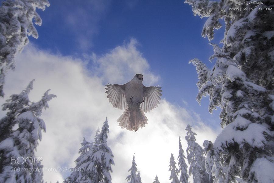 Photograph Alpine Angel by Jess Findlay on 500px
