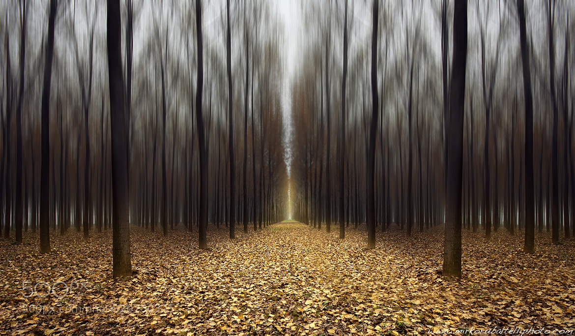 Photograph The forest by Mirko Rubaltelli on 500px