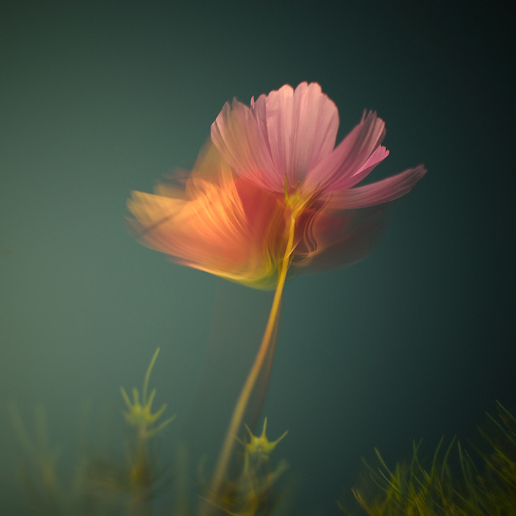 Photograph 花 - 흐른 ii by heydah on 500px