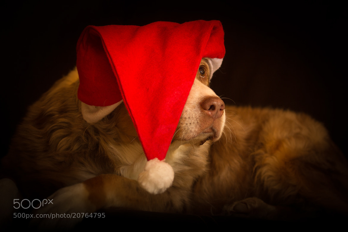 Photograph Santa Lucy by Mathias Ahrens on 500px