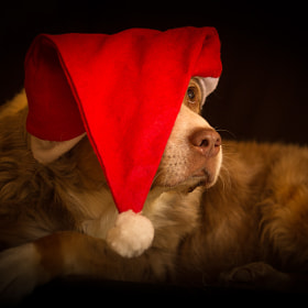 Santa Lucy by Mathias Ahrens (Nachtfrost)) on 500px.com