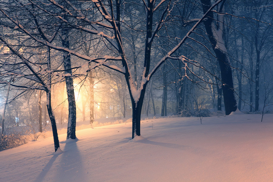Photograph winter park and light behind the trees by Sergiy Trofimov on 500px
