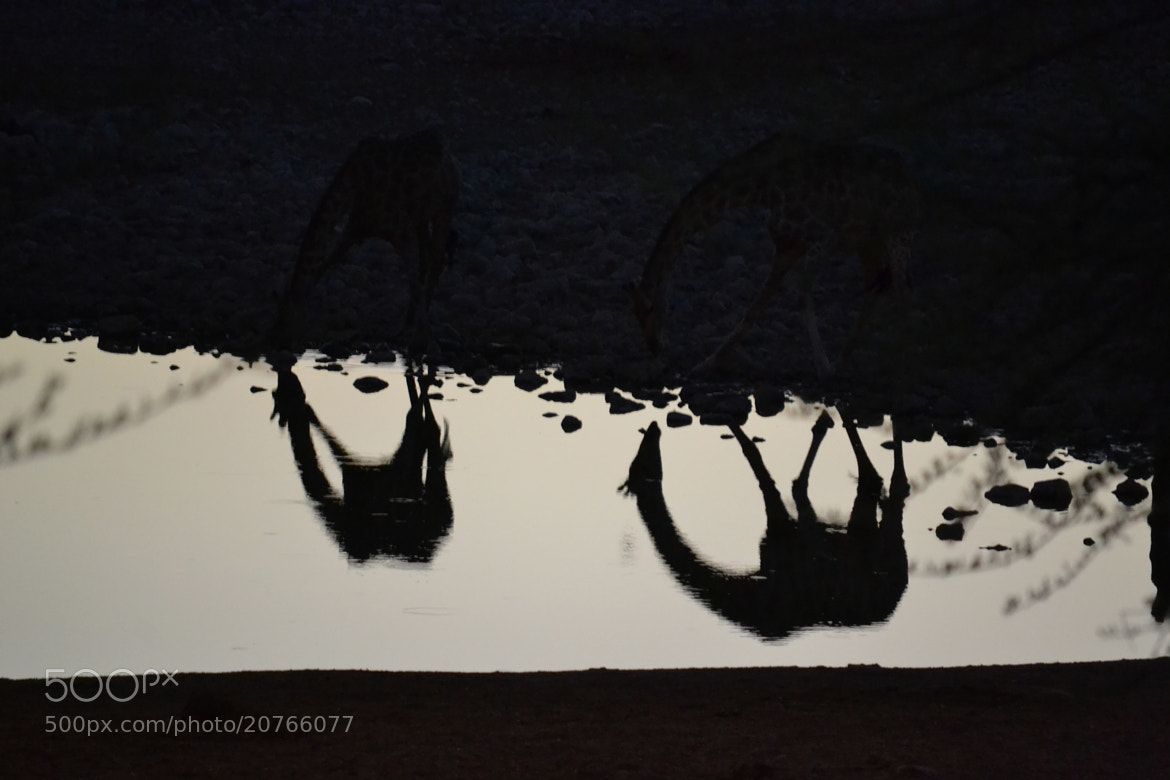 Photograph Silhouette by Nils Nik on 500px
