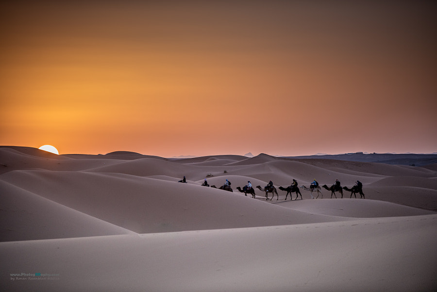 Camels on Sunset
